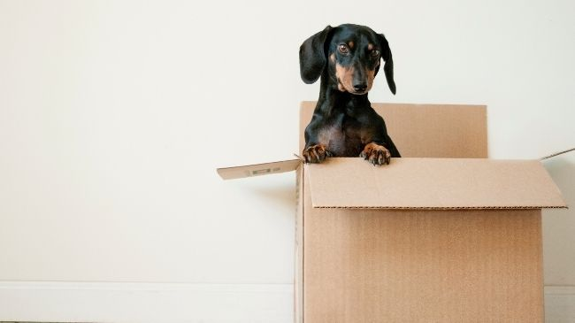 Moving with your pets to Australia